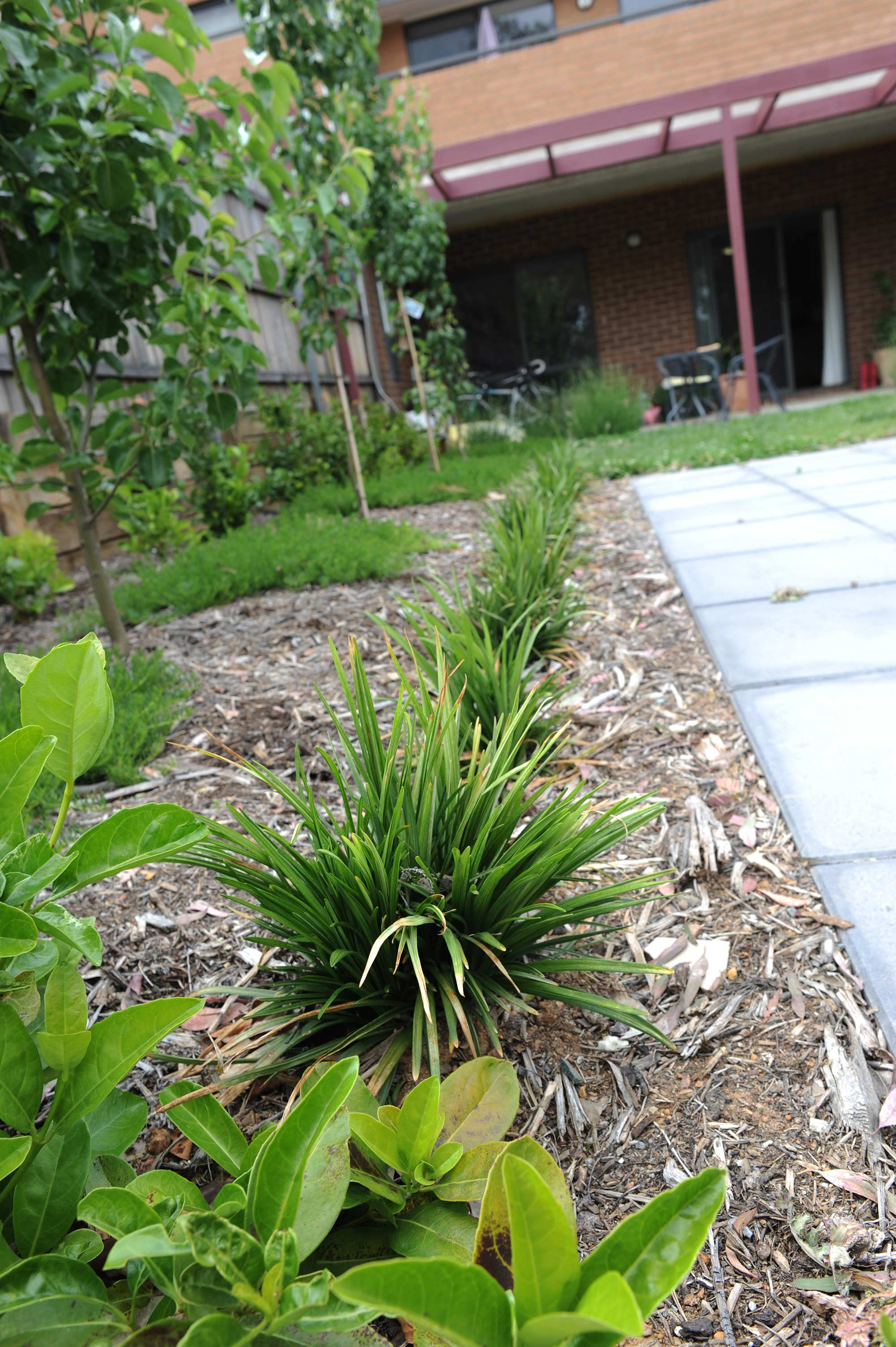 Tay Street, ACT. Paving, Turfing, Gardening and Retaining Wall 7